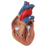 Hlavní obrázek - Kardiologie postoupila (nejen) do věku digitalizace