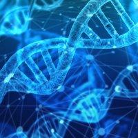 Hlavní obrázek - Správný vývoj thymocytů brání vzniku autoimunitních nemocí