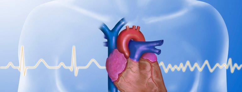 Hlavní obrázek - Velkoměsto ve zkumavce: vědci zjišťovali, jak simulované městské znečištění poškozuje srdce